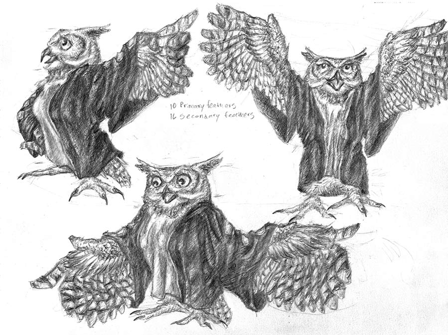 Character model sheet of an owl character in different poses