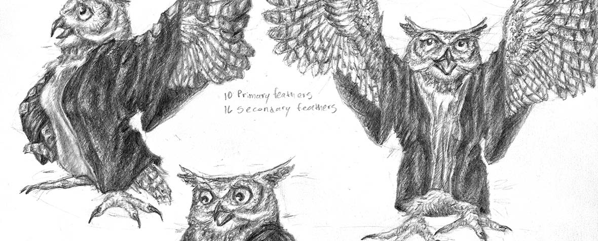 Detail of a character model sheet of an owl character